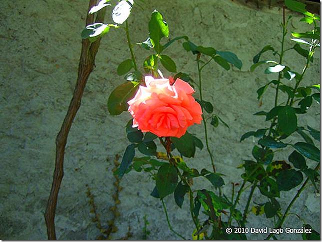 GALICIA_Freituxe (Lugo) 114 (14)