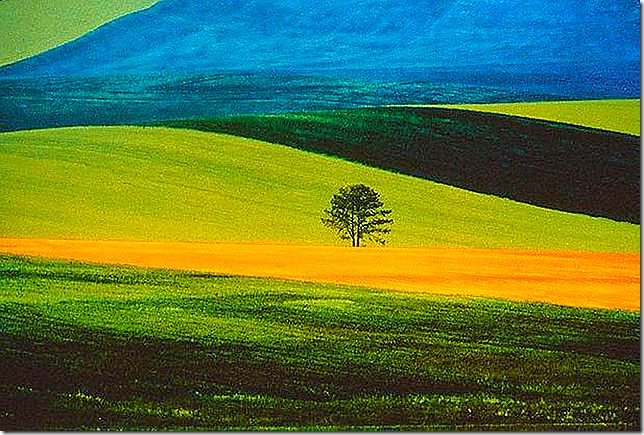 Franco Fontana, Landscape, 1978 by Franco Fontana.