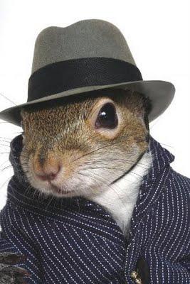 http://lh5.ggpht.com/_4o6frZEnR-s/TGnFKUZCrgI/AAAAAAAAAmg/KgOFJZI5NJ8/squirrel-pimp.jpg