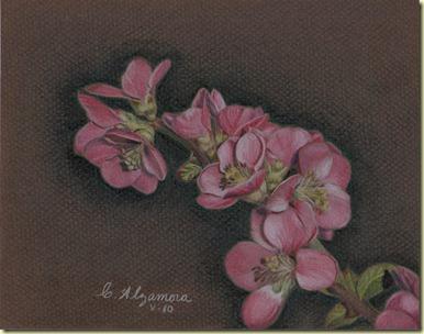 Flores de durazno 03 02