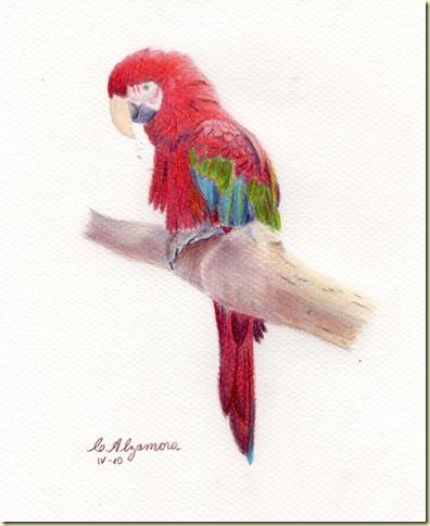 Papagayo 02