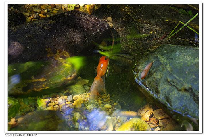 2010-09-22-富陽公園-有金魚