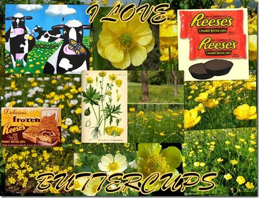 I Love Buttercups 2