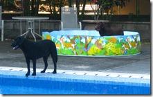 dog's pool