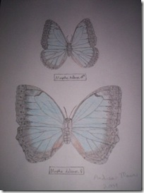 Andrea's butterflies