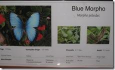 Morpho sign