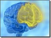 activacion-del-cortex-prefrontal-presenta-mejoras-en-la-memoria-de-trabajo_a_a