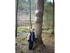 Strom svalovec.
