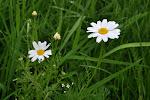 05-09 rmen rolní