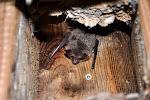 Malé překvapení v podobě netopýra.