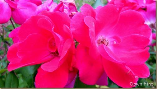 around the garden_099