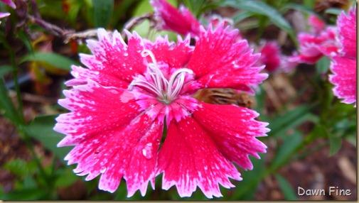 around the garden_061