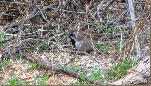 catalina birds and_053
