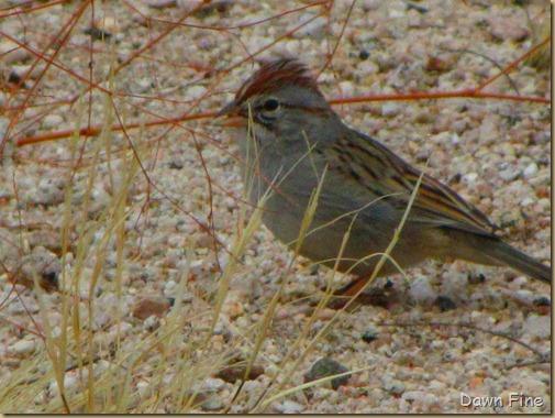catalina birds and_067