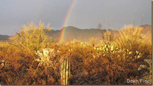 rainbow desert_012
