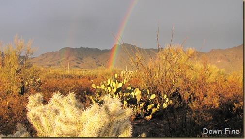 rainbow desert_014