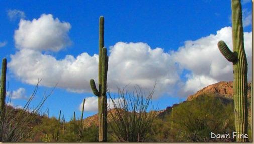 Desert museum_520