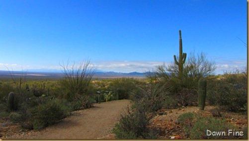 Desert museum_239_thumb