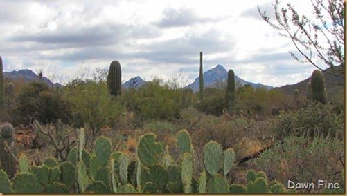 Desert museum_315_thumb