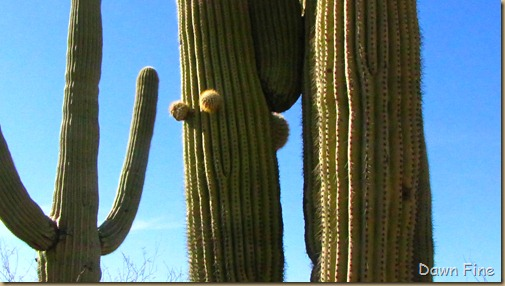 Sonoran NP west_039