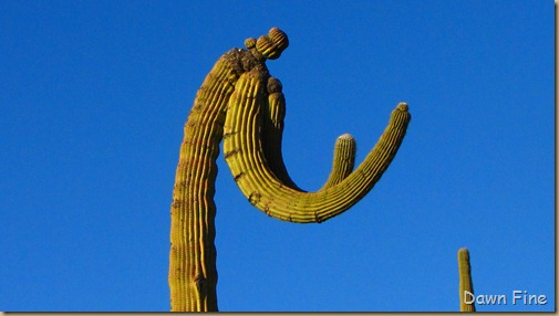 Sonoran NP west_085