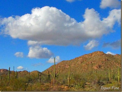 Desert museum_526