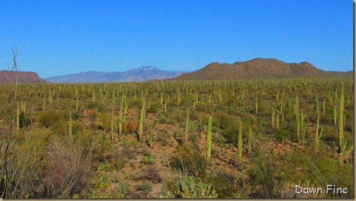 Sonoran NP west_082
