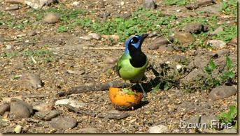 Padre Island birding_217