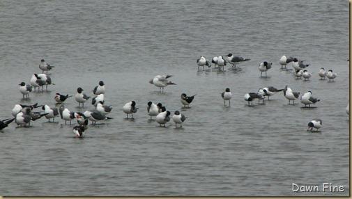 Padre Island birding_036