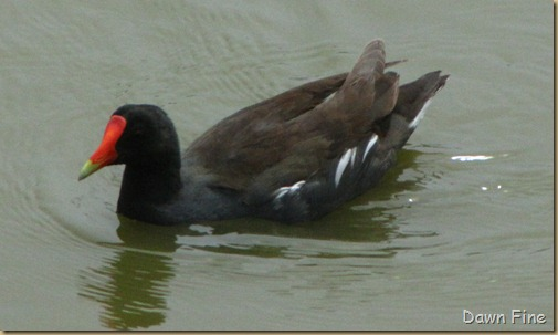 Padre Island birding_173