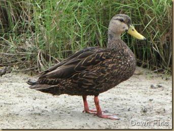 Padre Island birding_110