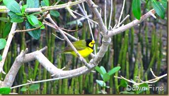 fallout birds padre island_002