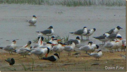 birding high island_015