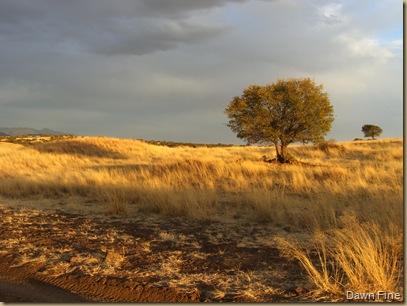 grasslandsnite (15)