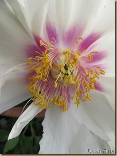 Flower closeups_20090503_006