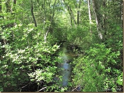 belliplain state forest_20090519_007