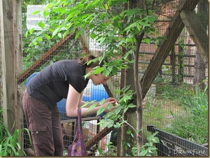 Sams garden _20090524_022