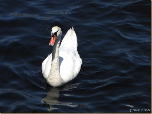 Swans_20090712_001