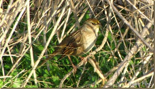 Consumnes birding_115