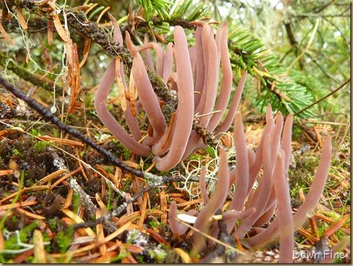 Mushroom picking sutton_006