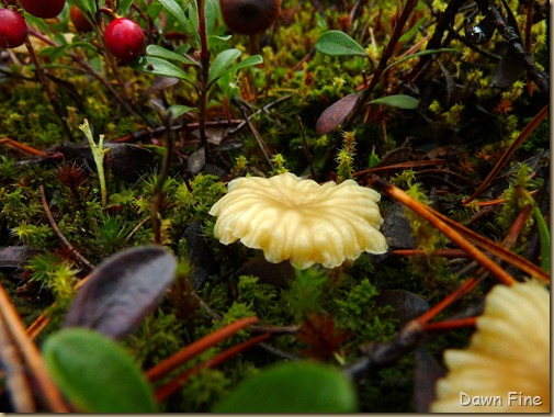 Mushroom picking sutton_035