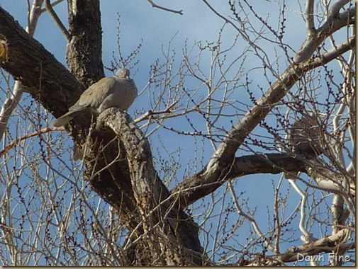 Christmas bird count red rock canyon_069