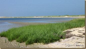 south beach birding_109