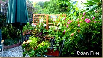 garden_024