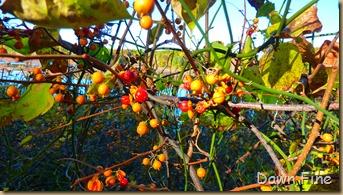 Autumn_020