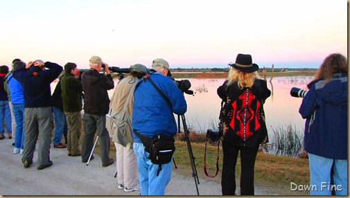 Viera wetlands_002