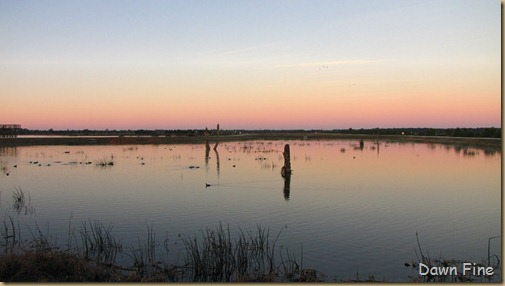 Viera wetlands_005