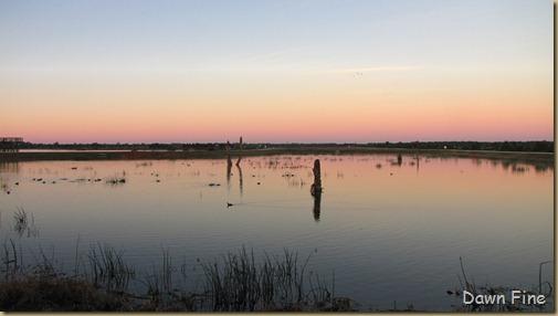 Viera wetlands_005