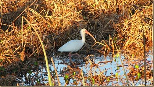 Viera wetlands_014