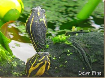Turtle jeffs